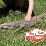 Smithgall-Woods Kids Adventure Petting Zoo Lizard