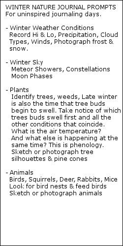 Nature Journal Winter Prompts