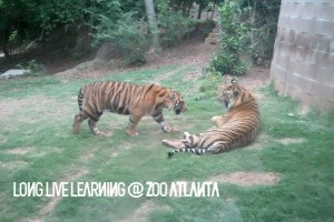 Zoo Atlanta Members Only