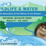 Gear up for National Wildlife Week with Family Activities, Educational Resources and more