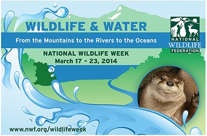 National Wildlife Federation Wildlife Wrrk