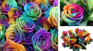 Make Rainbow Roses
