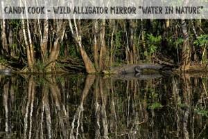 Photo by Candy Cook. Wild Alligator Mirror.