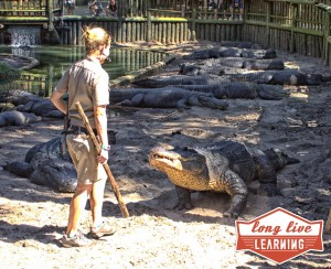 st-augustine-alligator-farm