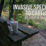 Invasive Species to Capture on Your Next Walk