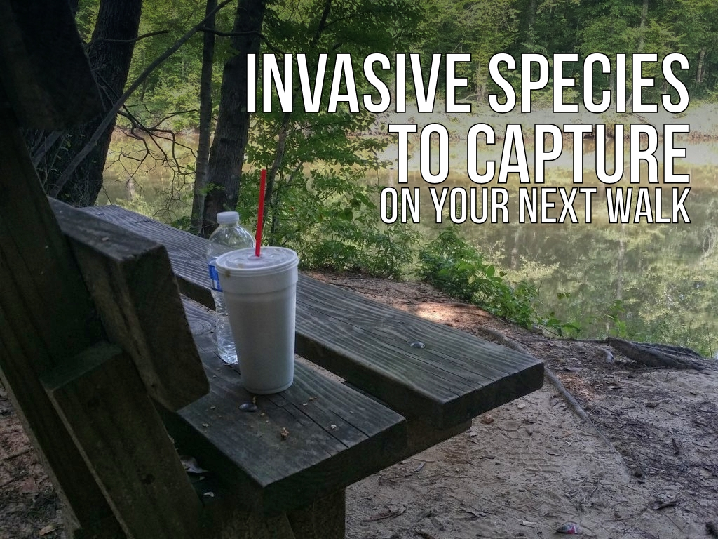 Invasive Species to Capture on Your Next Walk