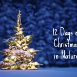 12 Days of Christmas in Nature