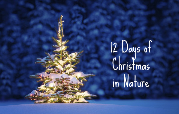 12 Days of Christmas with Nature