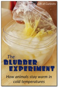 Animal Blubber Science Experiment