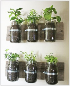 Plant an indoor garden