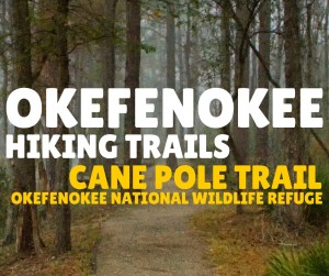 Okefenokee Hiking Trails - Cane Pole Trail