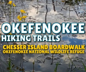 Okefenokee - Chesser Island Boardwalk