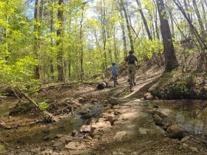 Georgia Mountain Bike Trails for all skill levels