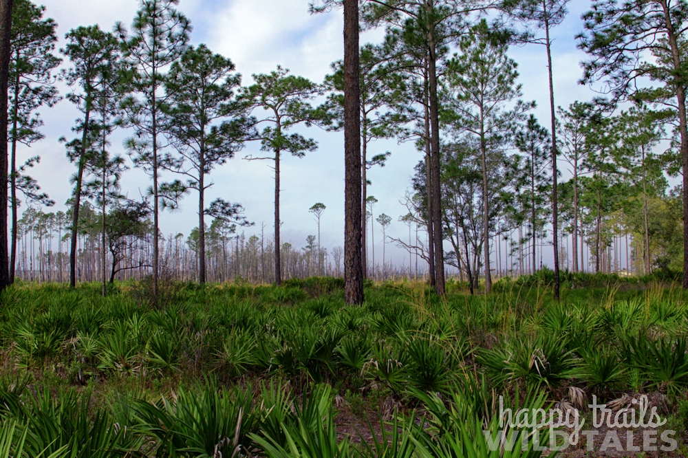 A look at longleaf pine-grasslands