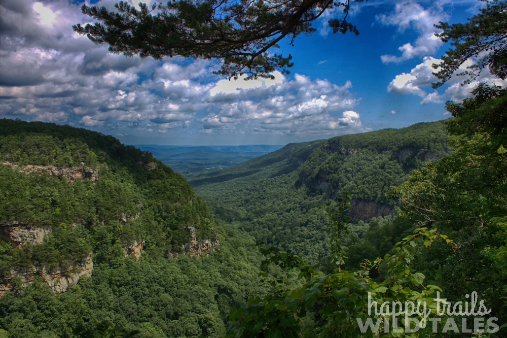 Backcountry camping at Cloudland Canyon State Park