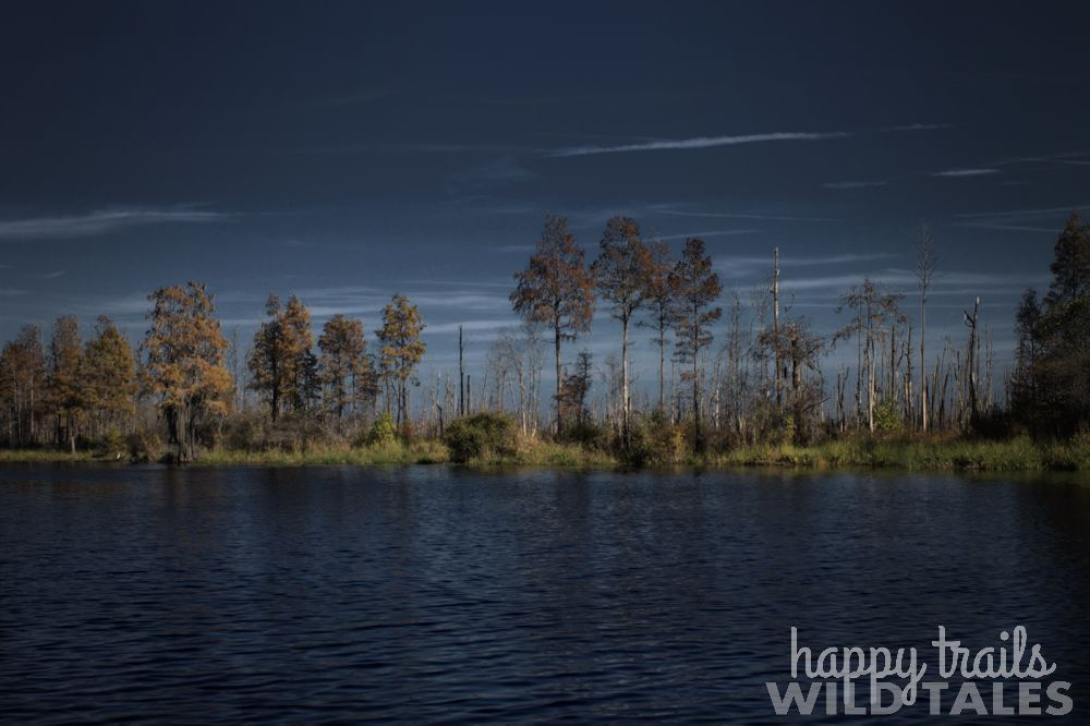 Backcountry Paddle camping in Okefenokee