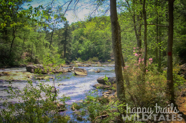 Sweetwater Creek State Park in Springtime